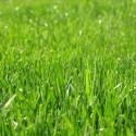 Zielonkowe